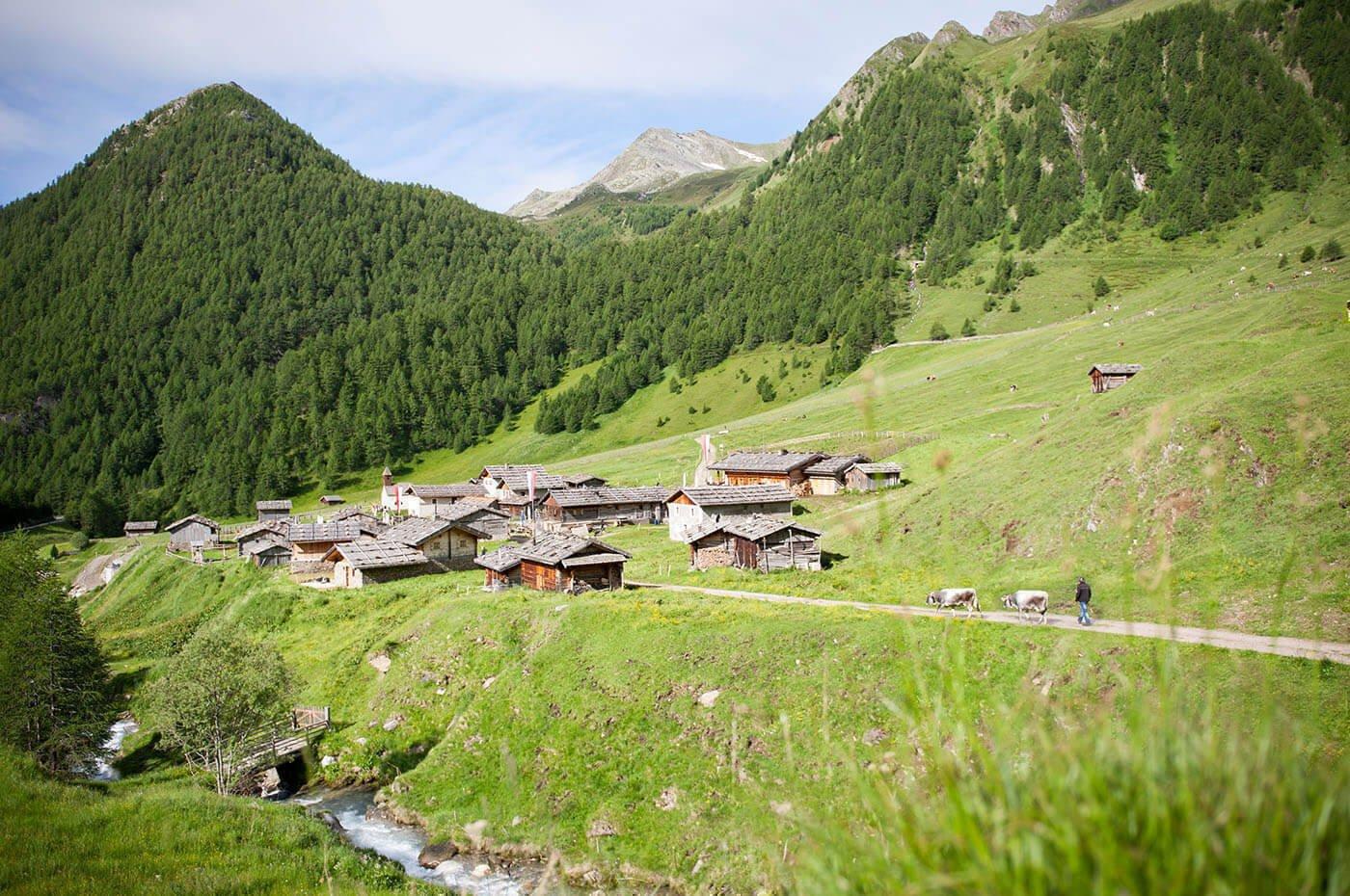 Höhenwanderung aufs Paechenjöchl und zur Fane Alm